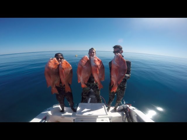 Spearfishing Great Barrier Reef - REDEMPTION E1