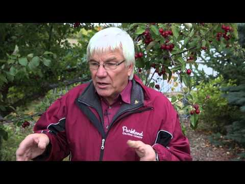 How to Plant Fruit Trees in Alberta Soil
