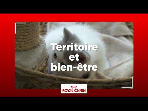Comment Votre Chat Définit-il Son Territoire ?