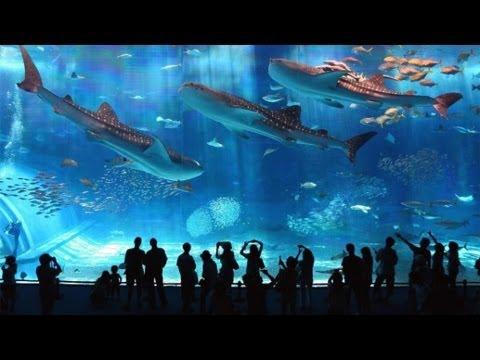 Самый большой океанариум В МИРЕ, Сингапур | The Largest Aquarium In The WORLD, Singapore