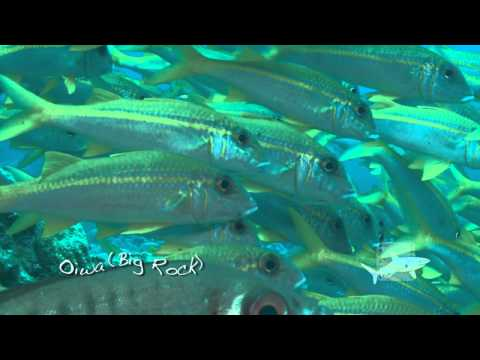 Ogasawara Islands Dives, Japan.