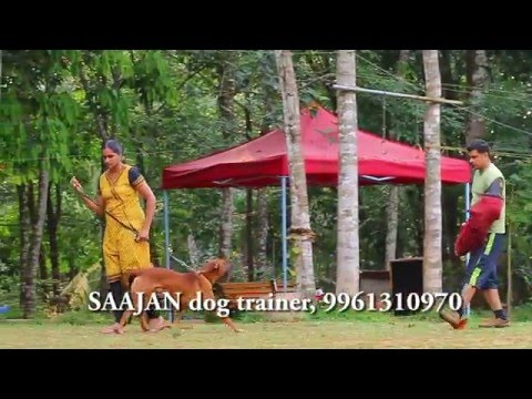 Self protection dogs for sale....Saajan dog training school at pala.9961310970