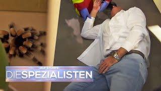 Schwindel, Dauererektion: Ein gefährlicher Spinnenbiss? | Auf Streife - Die Spezialisten | SAT.1 TV