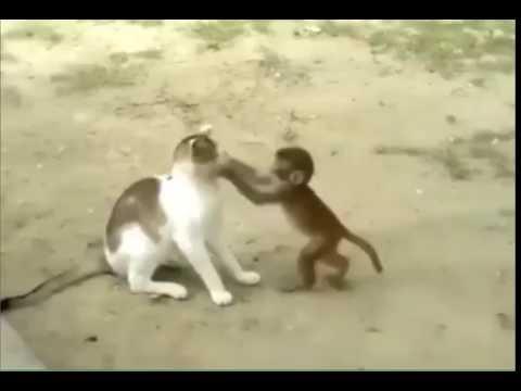 Naughty Monkey - Bandar aur billi