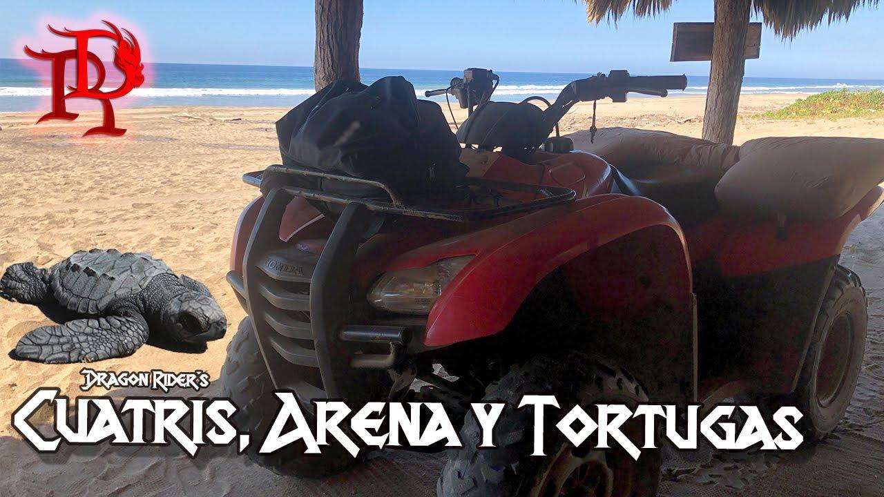 Aqui puedes venir a ver nacer tortugas en moto