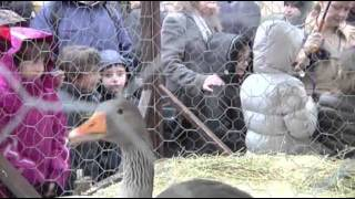 Raw: Animals Blessed in Vatican City