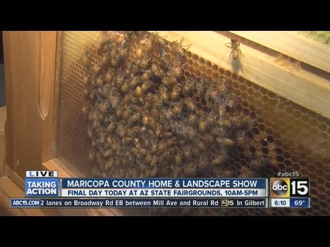 Bees at Maricopa County Home and Landscape Show