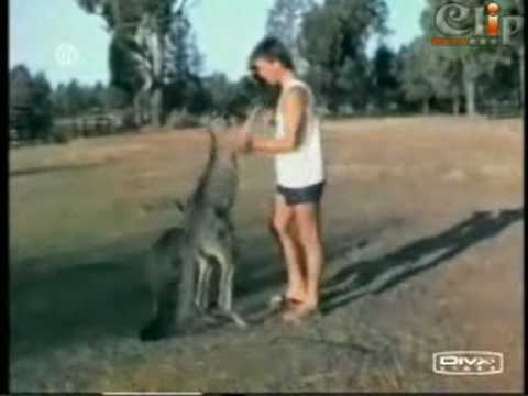 Hài hước với động vật.flv