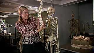 BBC Origins of Us 1 of 3 - Bones HDTV - Dr Alice Roberts