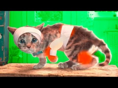 Мой маленький котик мультфильм игра! #игровой мультик для маленьких детей.