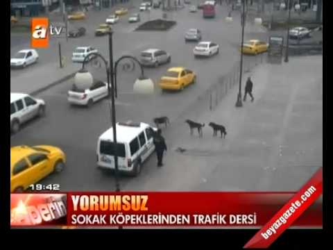 Ankara Mobese Kameraları