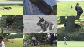 18 Annual Connecticut K9 Olympics 2009 Part 2 Of 3