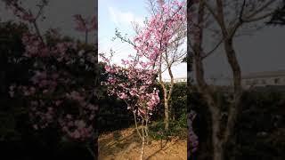 庭に垂れ桜  とか熊谷草とか色んな花があります。季節によって咲く花が...
