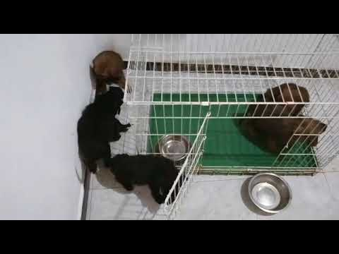 Tres de los ocho cachorros abandonados en Rábade ya tienen nuevo hogar