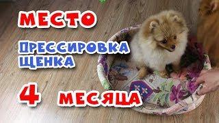 🐾 Дрессировка щенка.  Команда МЕСТО. Щенку 4 месяца