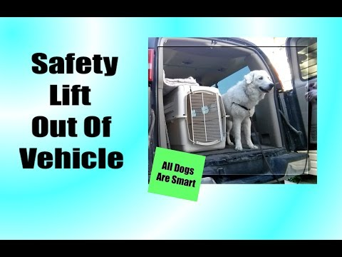 Safety Lift Out Of A Vehicle For Dogs