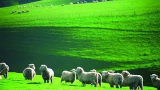 Chinese firms invest heavily in local NZ farms