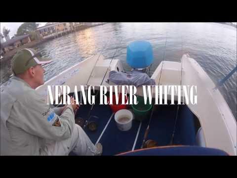 Nerang River Whiting Fishing - Gold Coast (Summer)