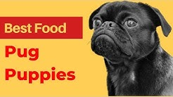 Best dog Food for Pug Puppies | Best Food For Pugs.