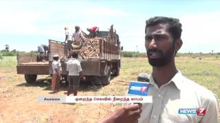 Increasing Cassava farming in Sivagangai | Tamil Nadu | News7 Tamil