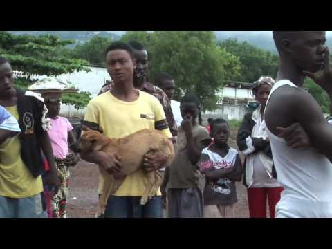 DOGS OF FREETOWN.mp4