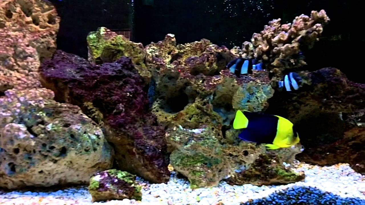 40 long saltwater fish only live rock youtube for Saltwater fish online