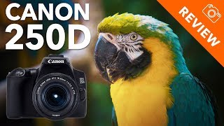 Beste allround spiegelreflex camera? - Canon 250D Review - Kamera Express