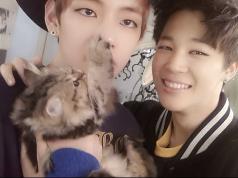 BTS with Animals Compilation