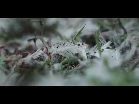 Download Chernobyl 2020 killing dogs
