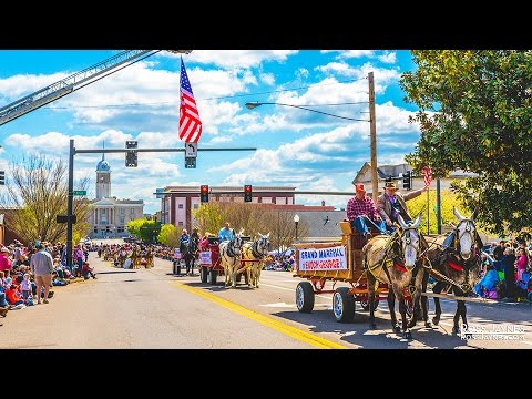 Mule Day Parade 2016