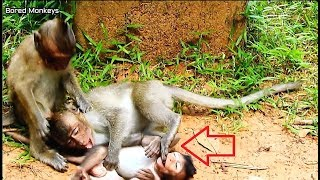 pity newborn monkey