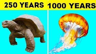दुनिया के सबसे लम्बी उम्र जीने वाले जानवर ( जरूर देखे ) World's Longest Living Animals