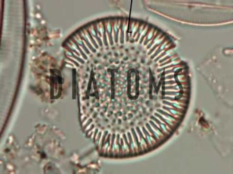 Diatoms: Collecting Core Samples in Lake Superior