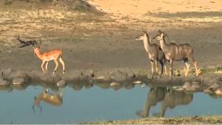 Oct 23 WildEarth Safari Sunset Drive ft Wild Dogs