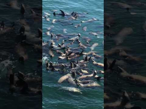 Seals in Santa Cruz CA