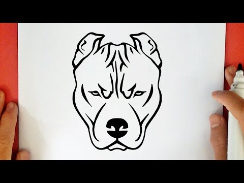 HOW TO DRAW A PITBULL