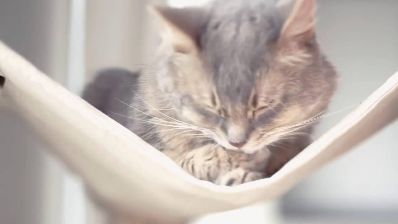 INDOOR: Programa nutricional para gatos