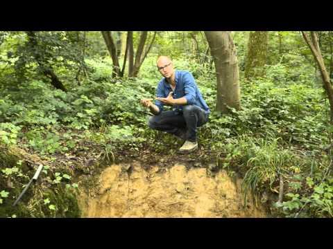Les sols, richesses cachées de la planète (1)