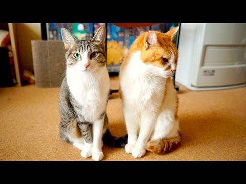 猫の頭突き3連発