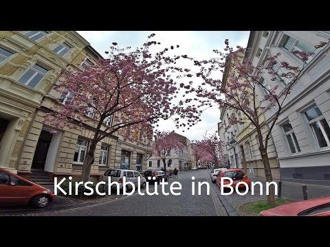 GoPro // Sakura // Bonn // Kirschblüte // Heerstraße // 2016