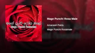 Mage Punchi Rosa Male