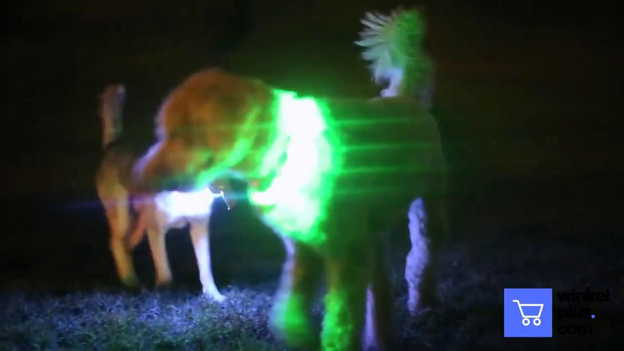 Hondenhalsband Met Licht : De led hondenhalsband youtube
