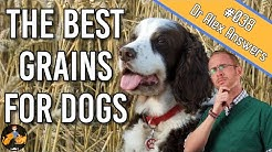 Can Dogs Eat Grains (+ what are the best grains to feed them?) - Dog Health Vet Advice