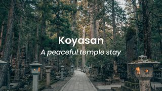 A peaceful temple stay in Koyasan, Japan | VLOG