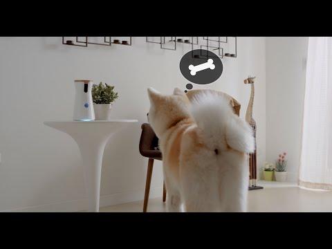 Furbo Treat Tossing Dog Camera Apps On Google Play