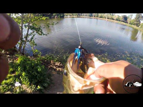 Hart Park Bass Fishing