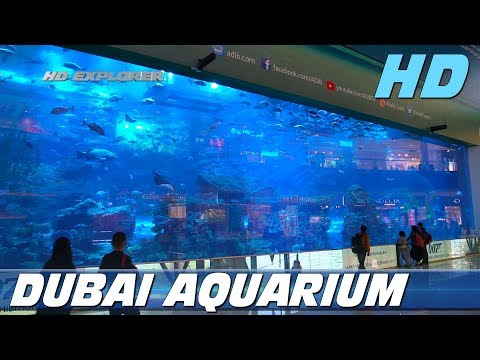 Dubai Mall & Aquarium (Dubai - United Arab Emirates)