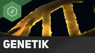 Chromosome, Gene, DNS / DNA – Grundbegriffe Genetik