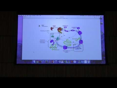 Nitrogen Metabolism - Kevin Ahern's BB 451 Lecture #51 2017