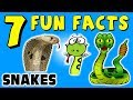 7 FUN FACTS ABOUT SNAKES! FACTS FOR KIDS! Reptiles! Learning Colors! Funny! Slytherin! Sock Puppet!